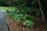 My Hostas Garden